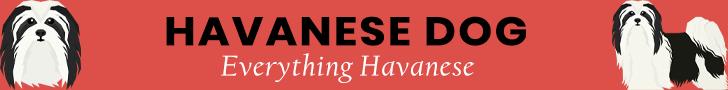 Havanese Dog Banner Ad
